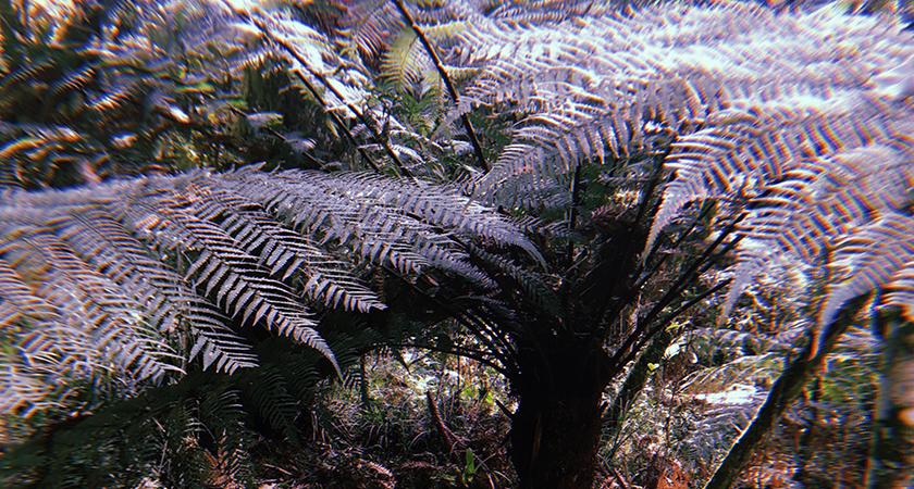 A extinção do xaxim é realidade. Como lidar com isso?