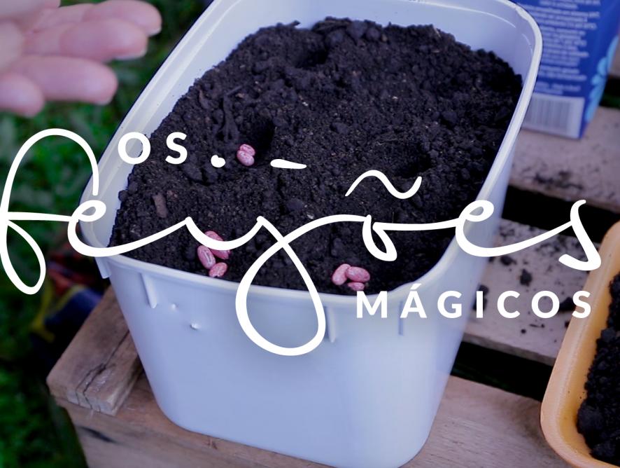 Jardim das Ideias #2: Os feijões mágicos