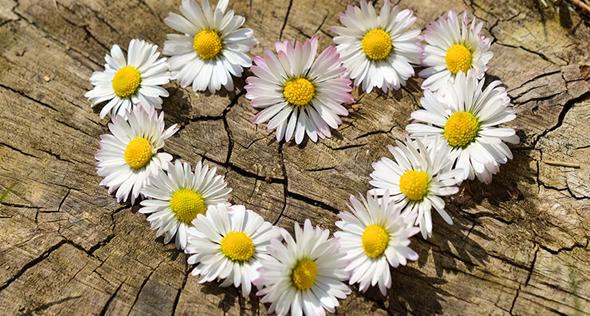 Descubra quais plantas combinam com seu signo