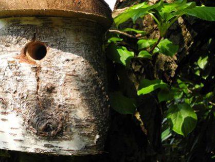 Veja como fazer uma casa de pássaros em apenas 5 passos