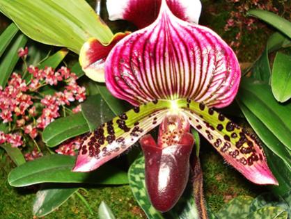Como cuidar das orquídeas terrestres