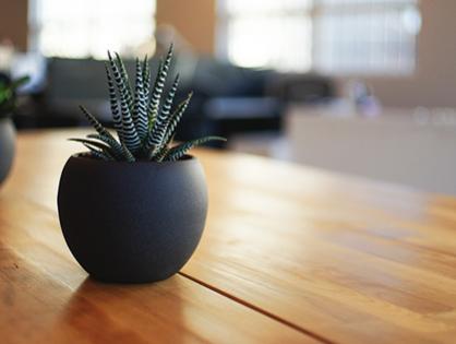 Plantas dentro de casa: descubra as melhores espécies para cada cômodo