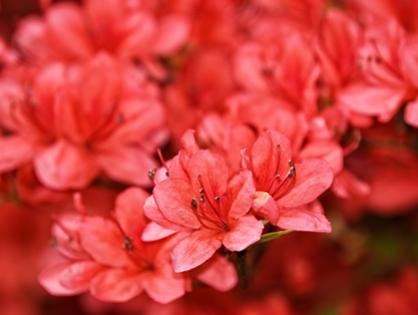 Que plantas são resistentes ao frio do inverno?