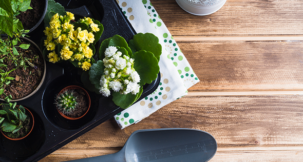 4 dicas para fazer um jardim pequeno