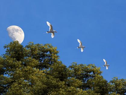 Como as fases da lua influenciam no jardim? Aprenda e faça bonito