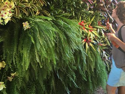 Como fazer um jardim vertical tropical: passo a passo