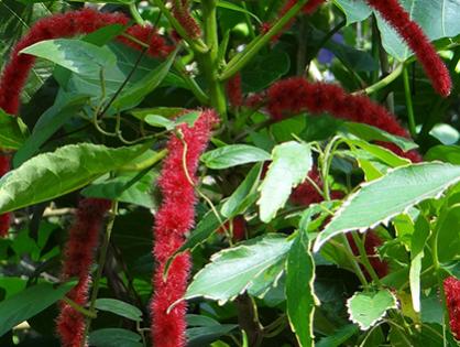 Conheça algumas espécies delicadas e resistentes ao sol