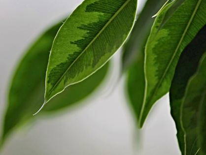 9 plantas que são resistentes ao vento