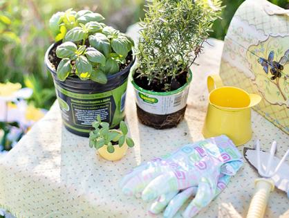 Erros na jardinagem: será que você está cometendo algum?