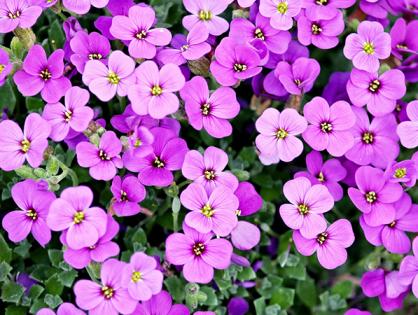 Como cuidar do jardim na primavera? Veja dicas!