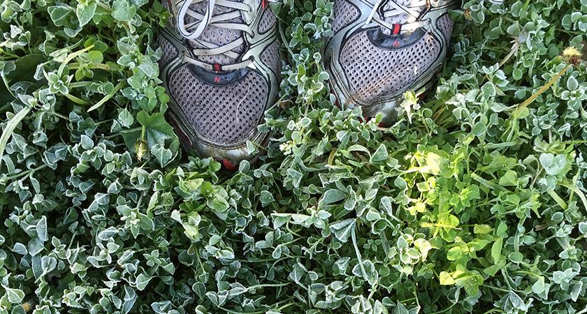 Plantas que eliminam maus odores nos calçados