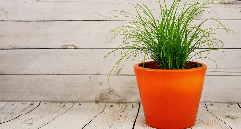 Qual o vaso perfeito para a sua plantinha?