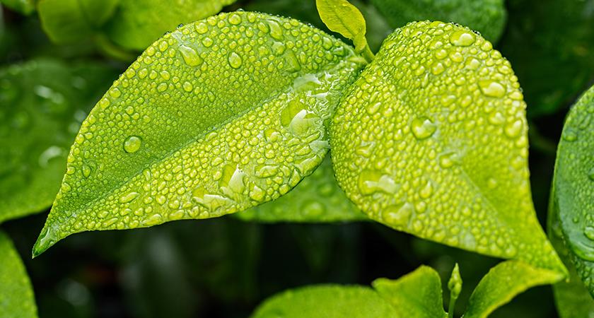 O que é adubação foliar? Descubra agora!