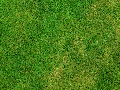 Como semear grama
