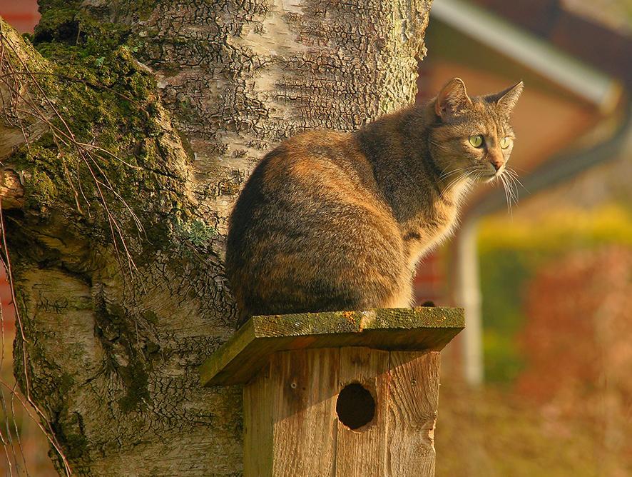 Formas de afastar gatos do jardim