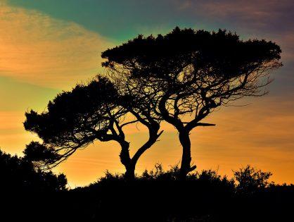 3 cuidados para ter antes de cortar árvores