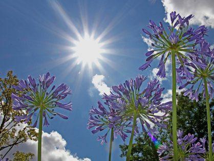 Soluções para proteger o jardim do sol