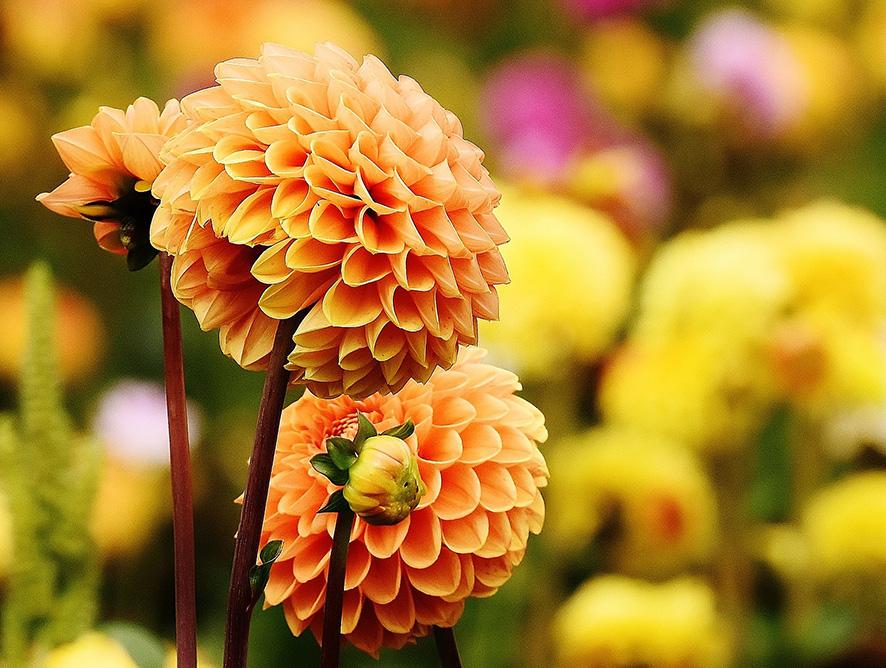 Flores que são a cara do verão