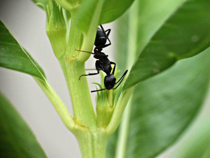 Como espantar formigas do jardim