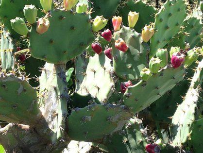 Plantas que precisam de pouca rega