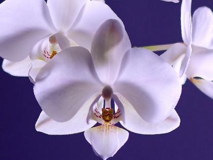 Aprenda a plantar e cuidar de orquídeas
