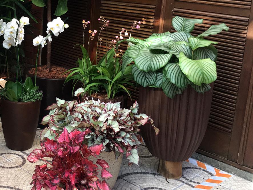 Plantas para ambientes abafados
