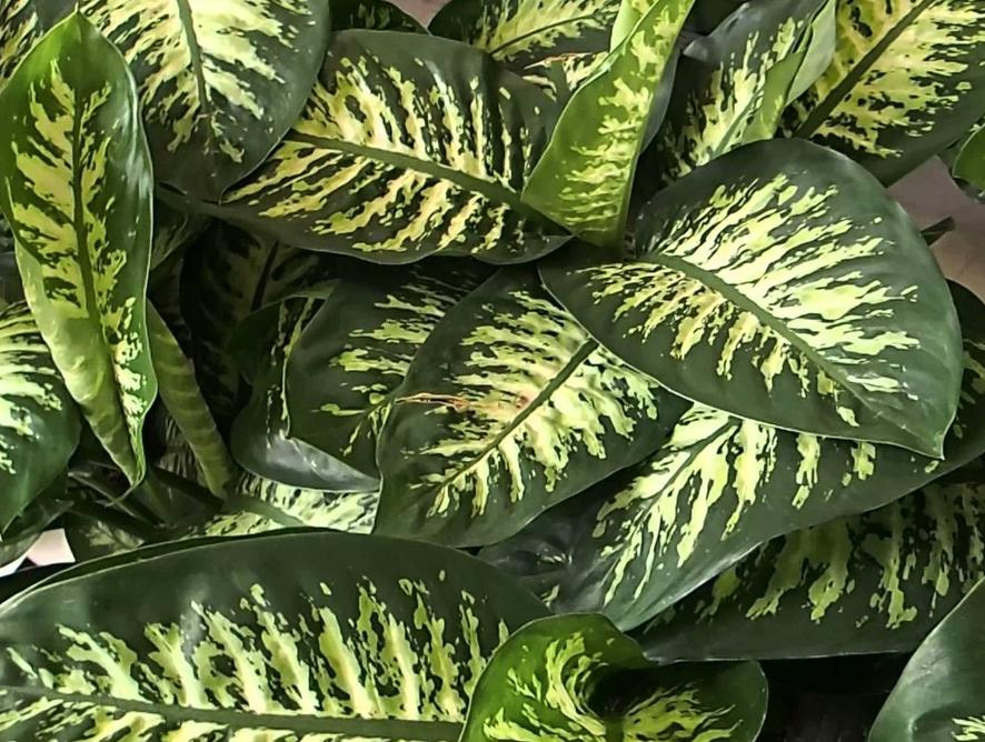 5 plantas que ajudam a purificar o ar