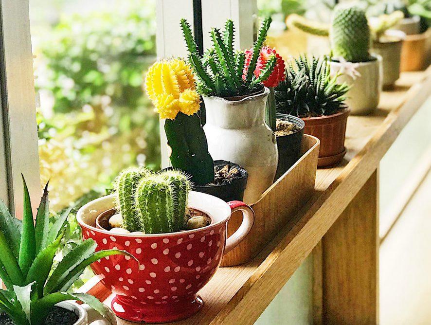 Como começar um jardim de apartamento