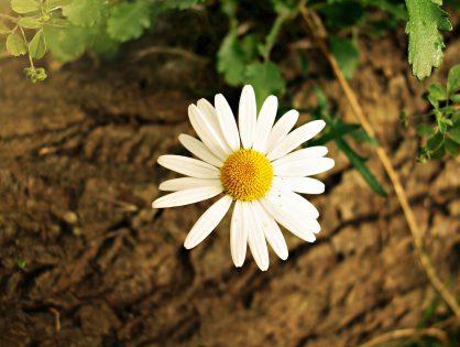 Plantas de sol: melhores espécies