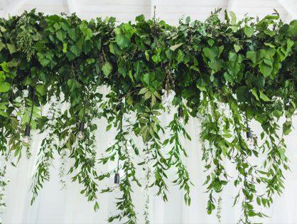 Plantas suspensas: espécies e dicas