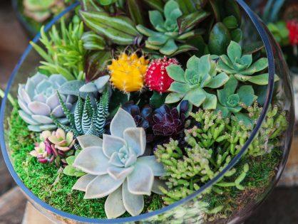 Confira as 5 melhores plantas para montar um terrário
