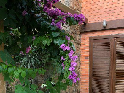 Trepadeiras floridas: espécies que você precisa conhecer