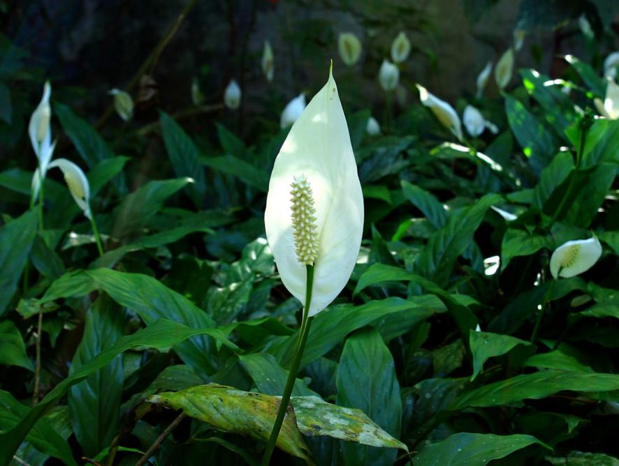 Como cuidar de plantas em lugares úmidos