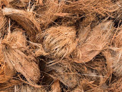 Fibra de coco na jardinagem