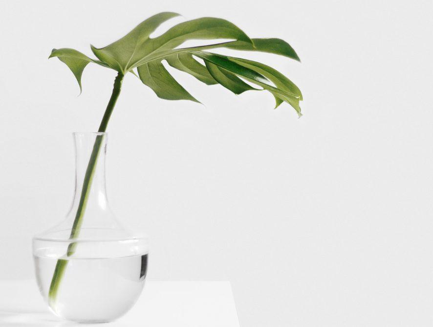 Como transferir plantas da terra para a água