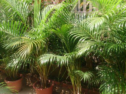 Plantas grandes para decorar sua casa