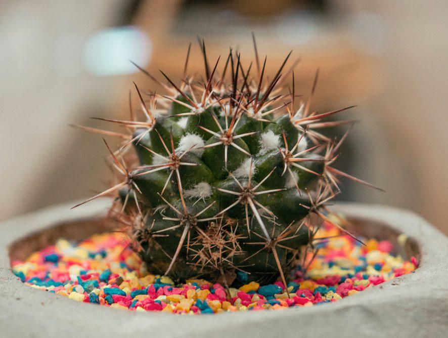 Ideias de presentes para quem gosta de plantas e flores