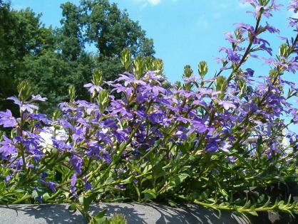 Plantas pendentes: 10 espécies para conhecer