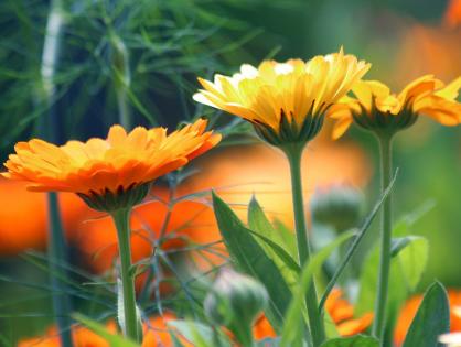 Flores e hortaliças para plantar em junho