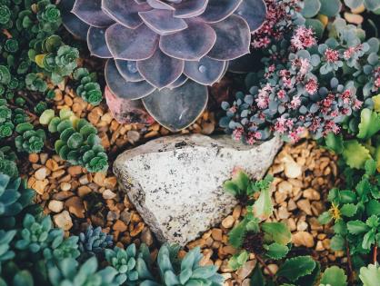 Jardim de cactos e suculentas: como montar