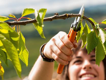 Tesoura de poda: essencial para o jardim