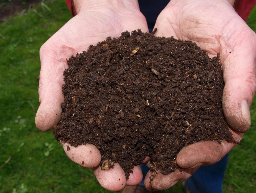 Tipos de adubo para jardinagem