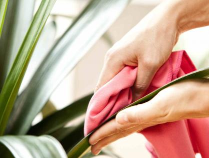 Como limpar folhas