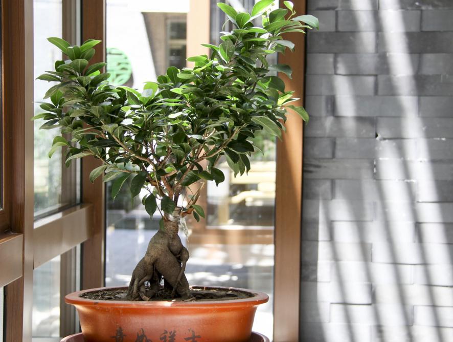 Principais dúvidas sobre bonsai