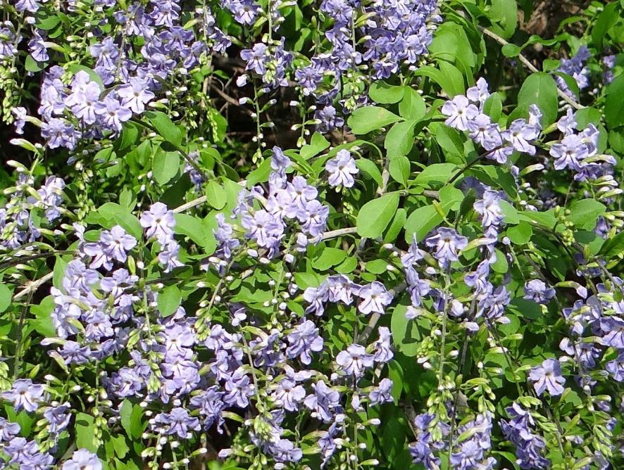 Plantas como muro: conheça espécies indicadas