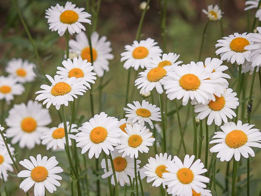 Cuidados com o jardim na primavera