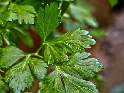 Jardinagem orgânica: 5 dicas para começar