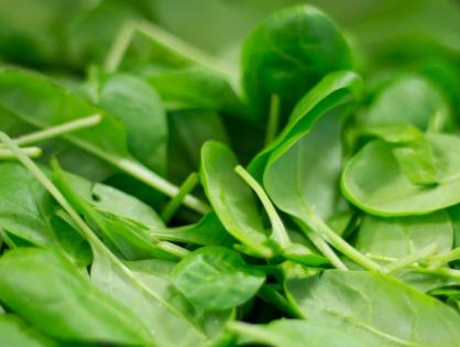 Cultive espinafre em casa
