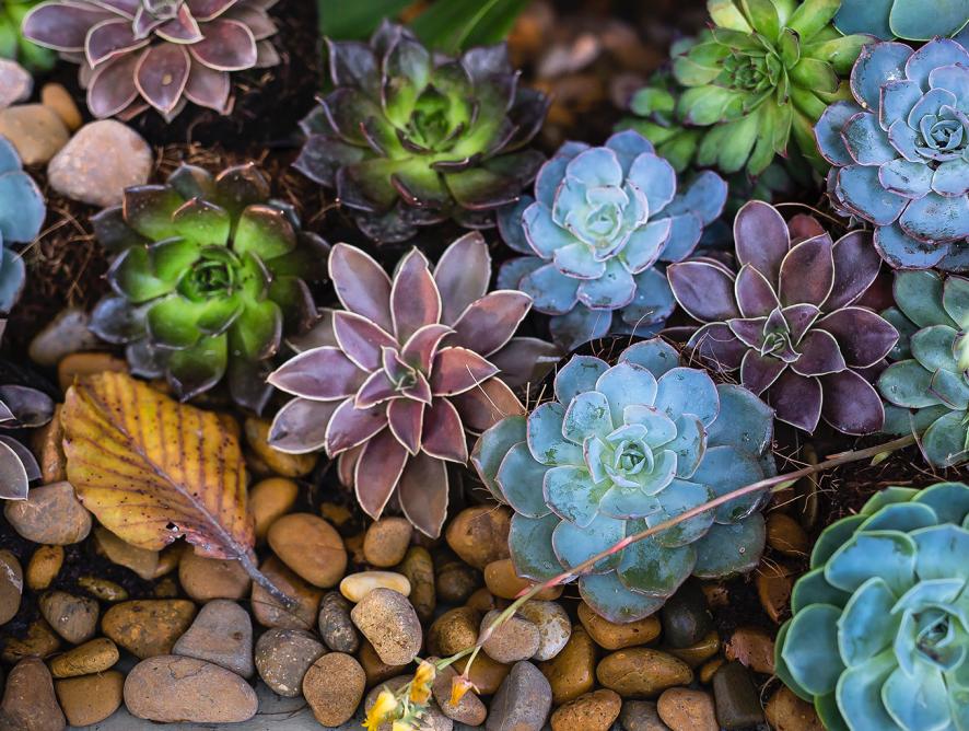 Pedras ideais para o jardim