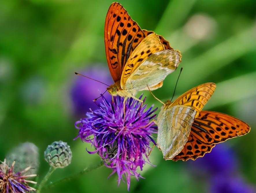 5 dicas para deixar seu jardim atrativo aos animais